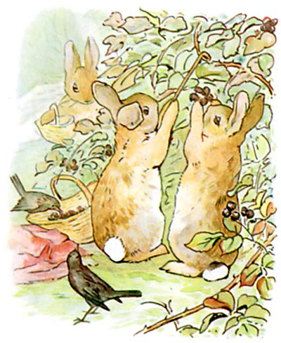 http://www.tonightsbedtimestory.com/wp-content/uploads/2008/11/the-tale-of-peter-rabbit-6.jpg